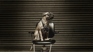 Preview wallpaper chair, dog, glasses, metalist