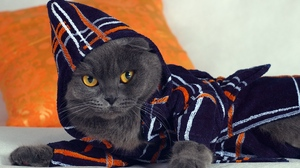 Preview wallpaper cat, fashion, gown, hood, lying