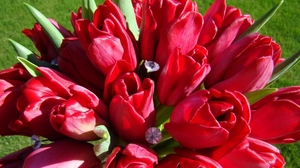 Preview wallpaper bouquet, herbs, jewelry, spring, tulips