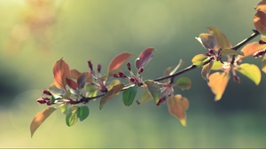 Preview wallpaper apples, flowers, grass, leaves, twigs