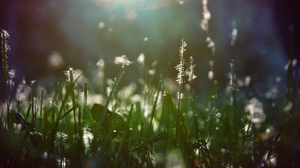 Preview wallpaper grass, light, moist, shade