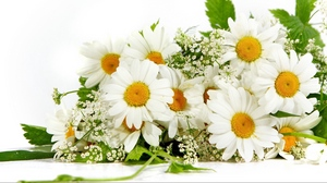 Preview wallpaper chamomile, flower, green, mood, summer