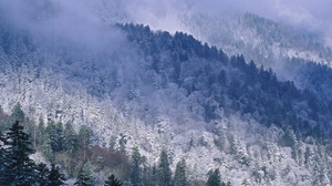 Preview wallpaper coniferous, great smoky mountains, height, mountains, snow, tennessee, trees, winter