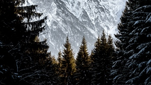 Preview wallpaper landscape, mountains, snow, trees, winter