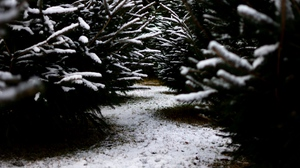 Preview wallpaper branches, path, snow, winter