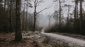 Preview wallpaper autumn, fog, forest, frost, path, trees