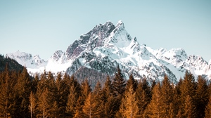 Preview wallpaper forest, mountain, peak, snowy, trees