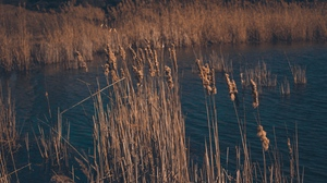 Preview wallpaper dry, grass, reeds, swamp