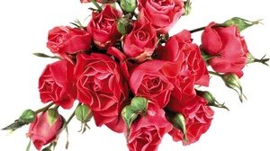 Preview wallpaper bouquet, bright, buds, roses