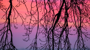 Preview wallpaper branches, dusk, nature, purple, sky