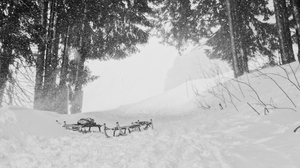 Preview wallpaper sleds, snow, trees, winter