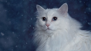 Preview wallpaper cat, fluffy, muzzle, thick