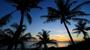 Preview wallpaper outlines, palms, sea, sunset, tropics