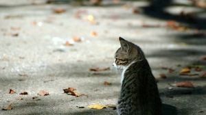 Preview wallpaper autumn, cat, leaves, striped, waiting