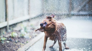 Preview wallpaper dog, terrier, water