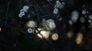 Preview wallpaper bloom, branches, flowers, macro, white