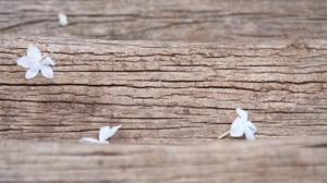 Preview wallpaper flowers, macro, texture, white, wood