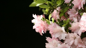 Preview wallpaper flowers, leaves, plants, stamens, white