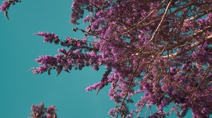 Preview wallpaper bloom, branches, flowers, spring