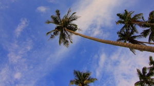 Preview wallpaper branches, palms, trees, tropics, view from below