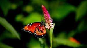 Preview wallpaper butterfly, flower, plant