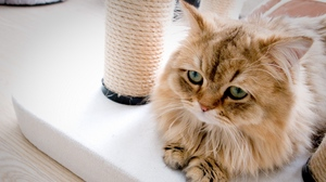 Preview wallpaper cat, fluffy, sadness, sill