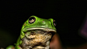 Preview wallpaper color, frog, muzzle, shade