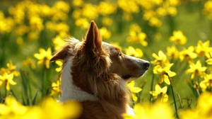 Preview wallpaper dog, face, flowers, profile