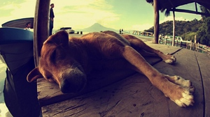 Preview wallpaper dog, lying, rest, sleeping