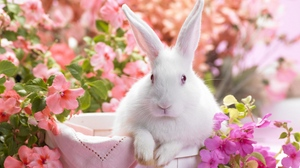 Preview wallpaper colorful, ears, rabbit, sitting
