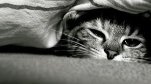 Preview wallpaper black and white, cat, down, eyes, face