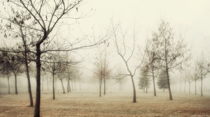 Preview wallpaper autumn, fog, grass, hoarfrost, morning, trees, withering, wood, young growth