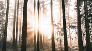 Preview wallpaper dawn, forest, nature, sunlight, trees