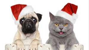 Preview wallpaper cat, dog, funny, hats