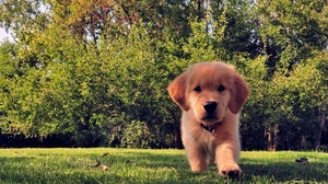 Preview wallpaper dog, funny, grass, puppy, summer