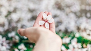 Preview wallpaper blossom, flower, hand, spring