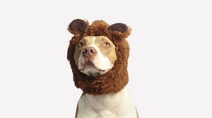 Preview wallpaper cool, dog, funny, hat, pit bull