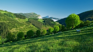 Preview wallpaper grass, hillside, mountain, sheep, summer, trees