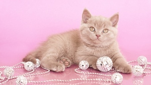 Preview wallpaper beads, jewelry, kitten, look, photoshoot