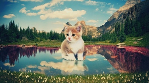 Preview wallpaper kitten, lake, nature, photoshop