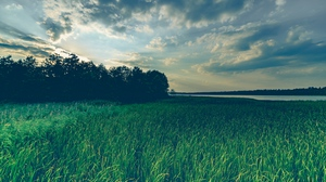 Preview wallpaper evening, grass, lake, trees