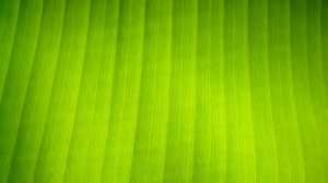 Preview wallpaper leaf, shade, stripes, surface