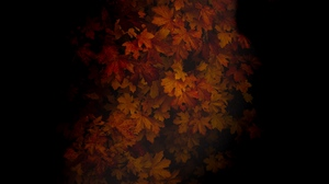 Preview wallpaper autumn, dark, leaves, maple, shadow, tree