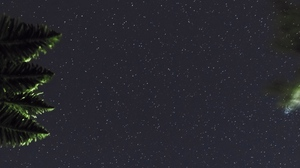 Preview wallpaper branches, dark, leaves, night, starry sky