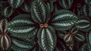 Preview wallpaper leaves, macro, plant, stripes, surface
