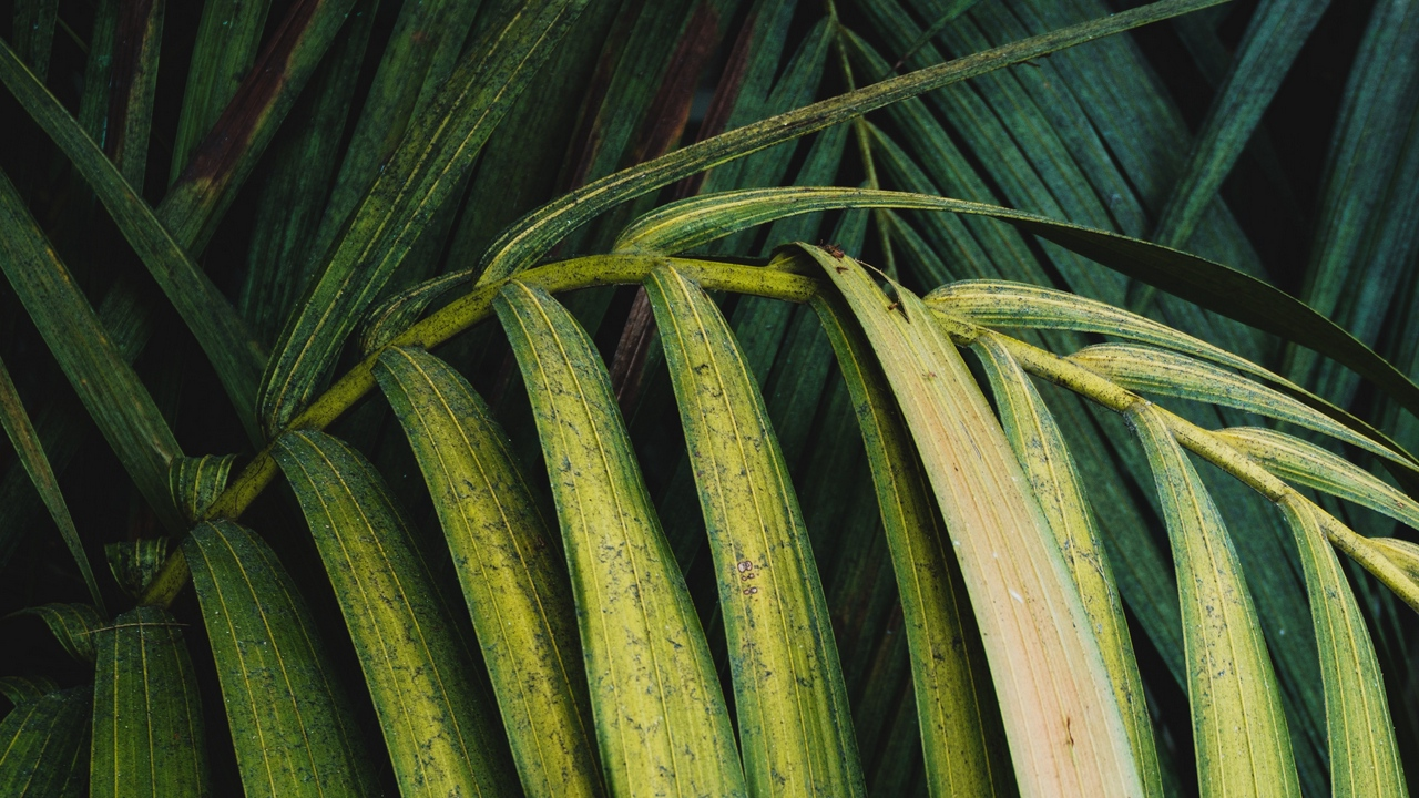 Wallpaper Leaves Plant Green Palm Branch Wallpapers Hd