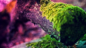 Preview wallpaper light, moss, twig