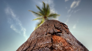 Preview wallpaper bark, macro, palm tree, sky, trunk