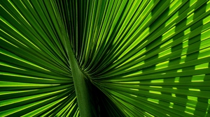 Preview wallpaper branch, carved, green, leaves, palm