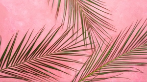 Preview wallpaper branches, leaves, minimalism, palm tree, pastel
